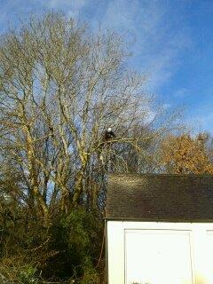 Tree Surgeon and Gardening Service (3)