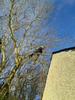Tree Surgeon and Gardening Service (4)