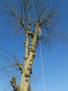Tree Surgeon and Gardening Service (43)
