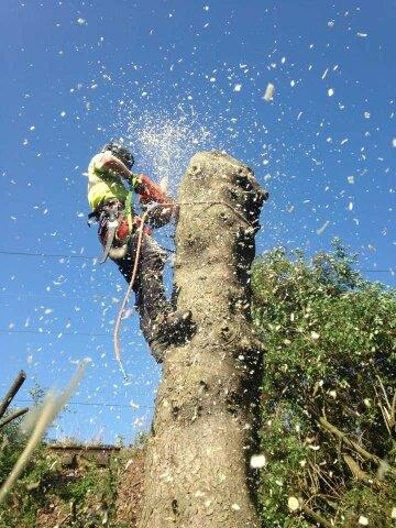Tree Surgeon and Gardening Service (53)