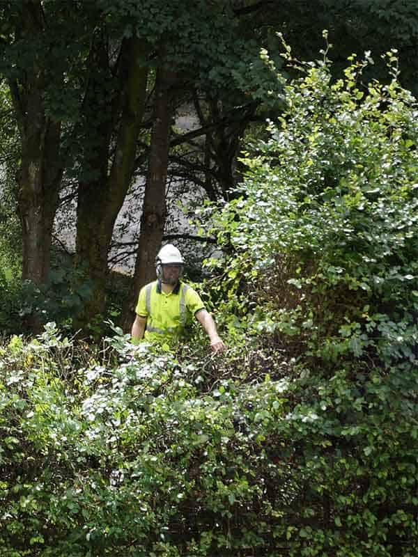 Tree Surgeon in East Kilbride thinning out branches